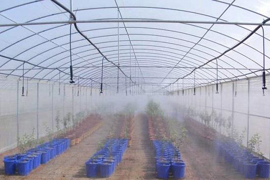 Установка туман полива своими руками 148